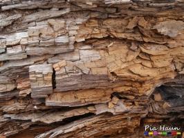 Braunfäule | zerstörte Holzschwelle an einem Fachwerkhaus | Foto: © Ingenieurbüro Pia Haun - Trier