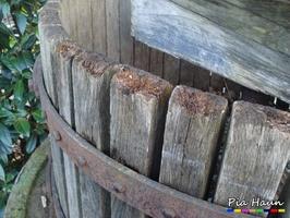 Gallerttränen | Fruchtkörper am Hirnholz einer frei bewitterten Kelteranlage, Foto: © Ingenieurbüro Pia Haun - Trier