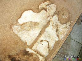 Echter Hausschwamm | Spanplatte mit Mycel, Foto: © Ingenieurbüro Pia Haun - Trier