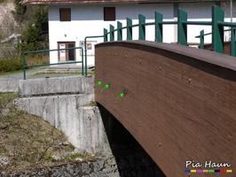Blättlinge | Befall der Leimholzbinder einer Brücke, Foto: © Ingenieurbüro Pia Haun - Trier