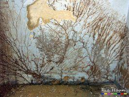 Tintlinge | üppiges Mycelwachstum an Mauerwerk, Foto: © Ingenieurbüro Pia Haun - Trier