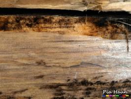 Bläuebefall an Holzschuppen, Foto: © Ingenieurbüro Pia Haun - Trier