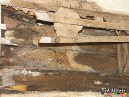 Marmorierter Kellerschwamm | Fruchtkörper und Mycel an Holzbalkendecke, Foto: © Ingenieurbüro Pia Haun - Trier
