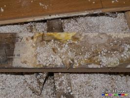 Oberflächenmycel des Echten Hausschwamms |  typische Hemmungsflecken am Mycel | Eichenholzfußboden wurde vor 3 Jahren neu verlegt, Foto: © Ingenieurbüro Pia Haun - Trier