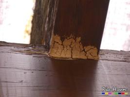 Gelber Porenschwamm/ / Gelbliche Braunfäuletramete | verblaster Fruchtkörper | Terrassenüberdachung eines Kindergartens, Knotenpunkt Sparren/ Fußpfette, Foto: © Ingenieurbüro Pia Haun - Trier