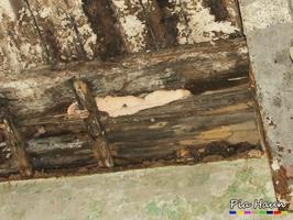 Saftporling |  Fruchtkörper an einer Holzbalkendecke eines verwahrlosten Anwesens, Foto: © Ingenieurbüro Pia Haun - Trier