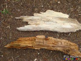 Bild zeigt im oberen Bereich Holz mit Weißfäule und im unten Holz mit  Braunfäule | Foto: © Ingenieurbüro Pia Haun - Trier