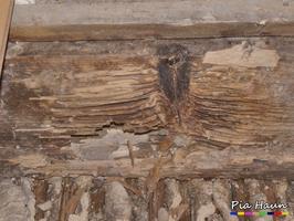 Holzbalkendecke | Folgeschaden durch Ameisen,  Foto: © Ingenieurbüro Pia Haun - Trier