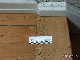 Bestandsaufnahme zur Ermittlung des Schadenserregers | Treppenanlage in einem Mehrfamilienwohnhaus, Foto: © Ingenieurbüro Pia Haun - Trier