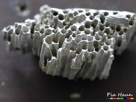 Schadensbild der Schiffsbohrmuschel, Foto: © Ingenieurbüro Pia Haun - Trier