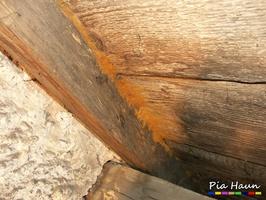 Tintlinge | Befall an Dachkonstruktion, Ozonium, Foto: © Ingenieurbüro Pia Haun - Trier