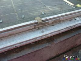 nicht fachgerecht teilausgebautes Fenster mit PCB-haltigem Anstrich, Foto: © Ingenieurbüro Pia Haun - Trier